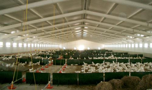 sistema-alimentacion-patos-Dos-2000-growket-2