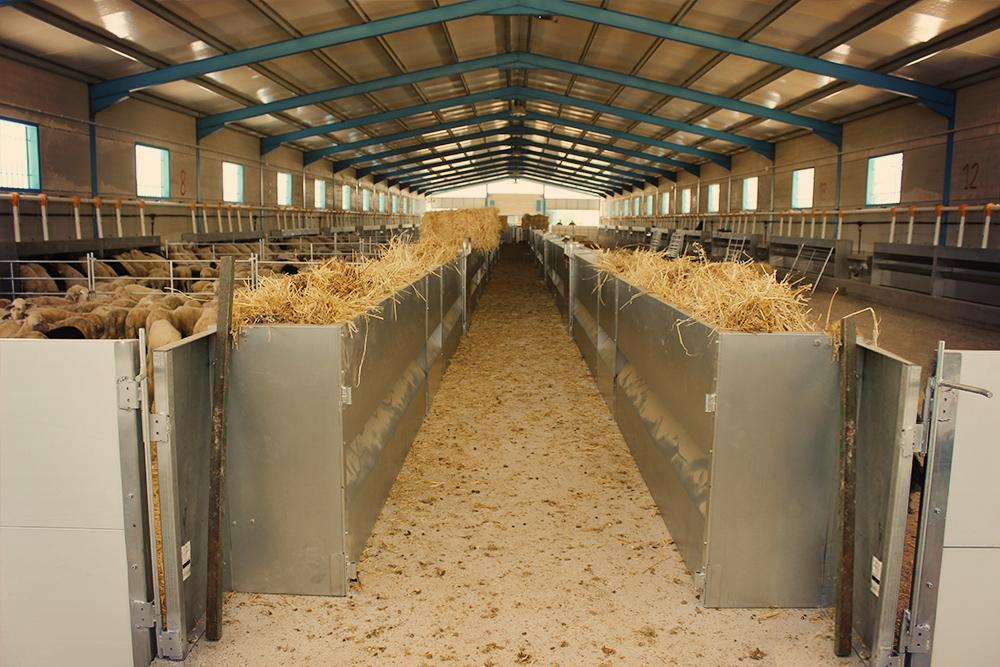 Ovine feeding system – Growket